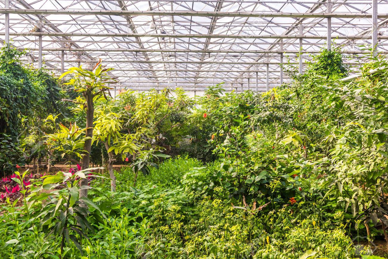 Immagini Piante E Fiori interno della serra con una varietà di piante e fiori
