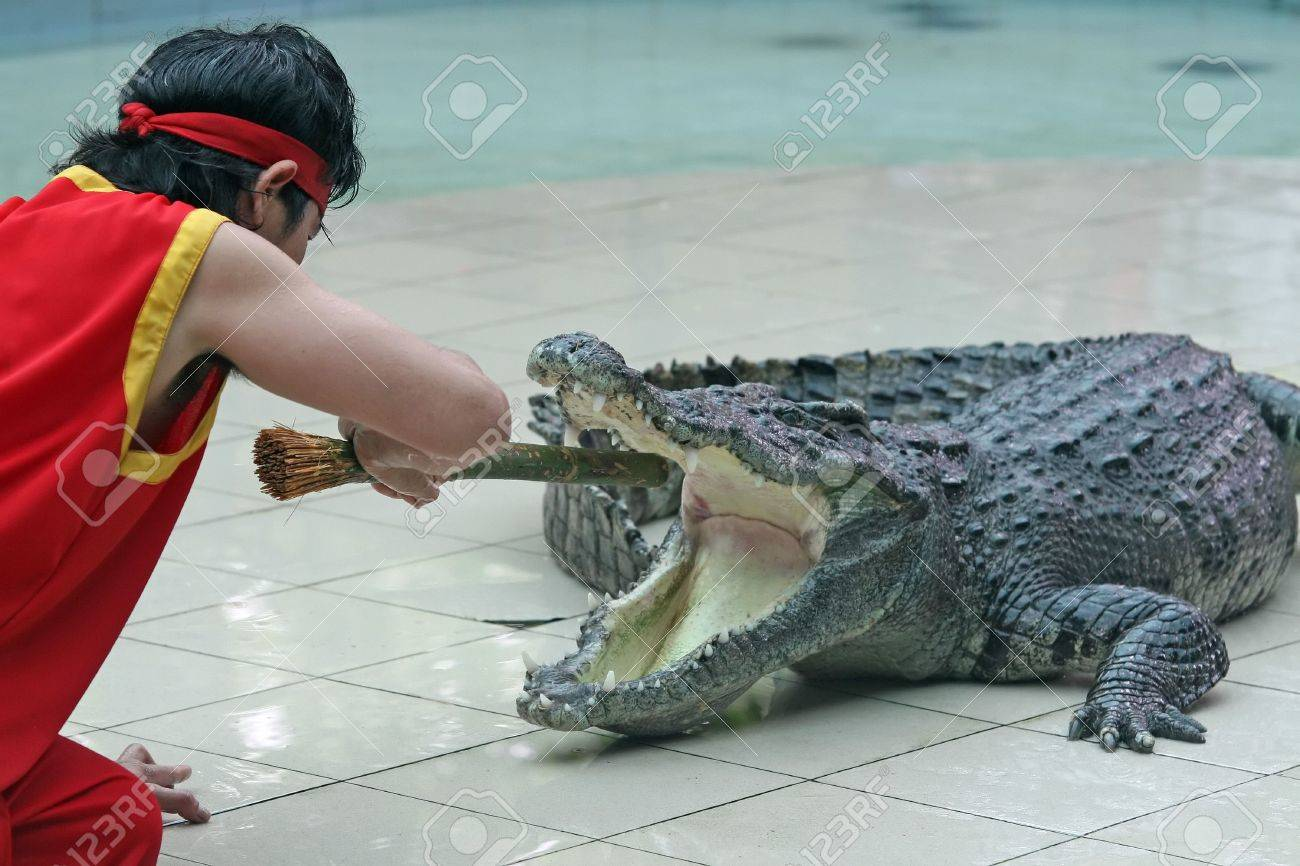 A zoo keeper in Thailand teases a crocodile with a stick Stock Photo - 1179304