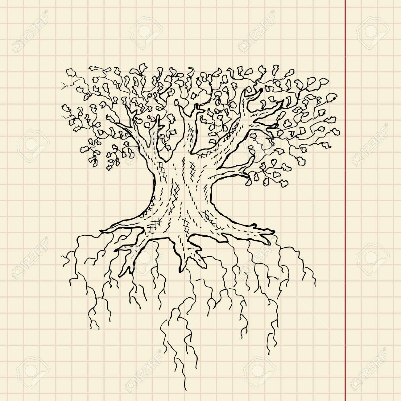 Oak tree sketch on school paper, vector illustration, eps 10 Stock Vector - 11377806