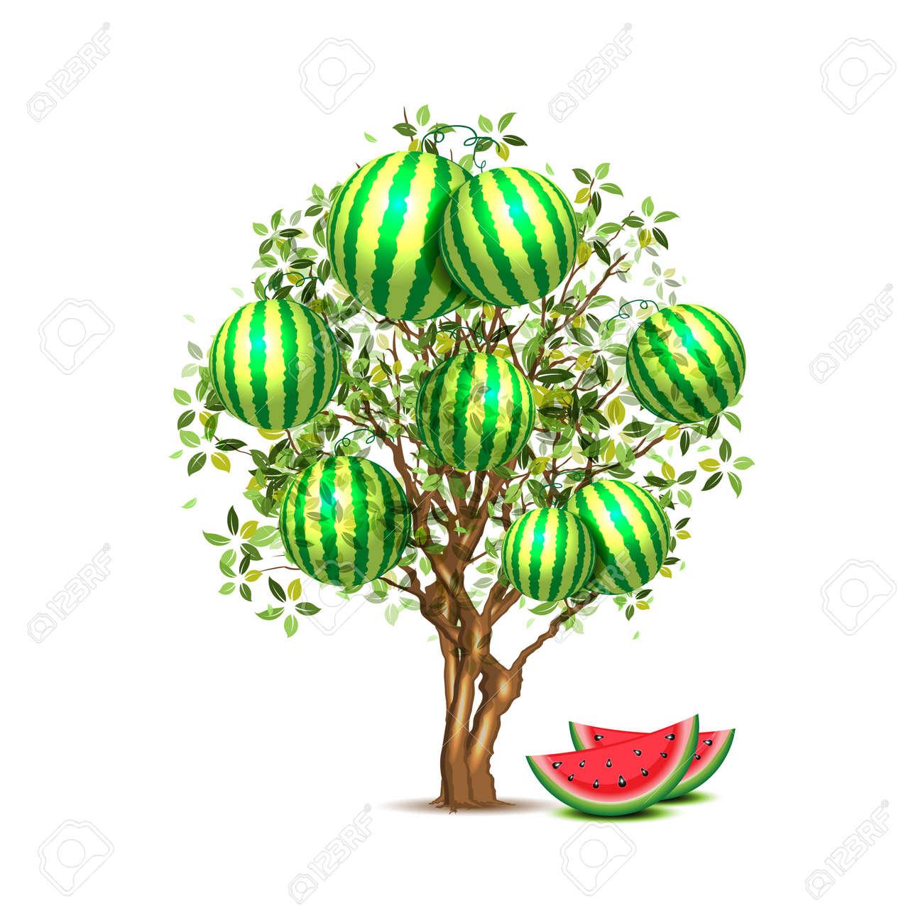 arbre de la pastèque clip art libres de droits , vecteurs et