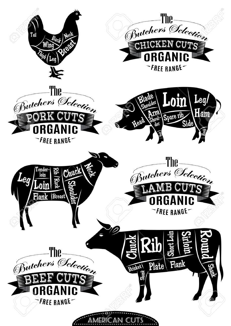 Diagram cut carcasses of chicken pig cow lamb stock photo diagram cut carcasses of chicken pig cow lamb stock photo 28104324 pooptronica