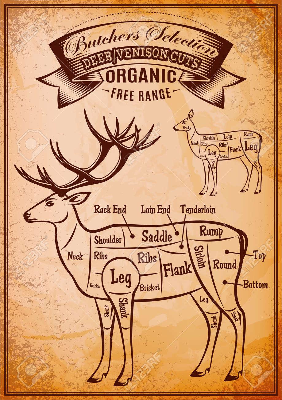 Deer Leg Diagram - Introduction To Electrical Wiring Diagrams •