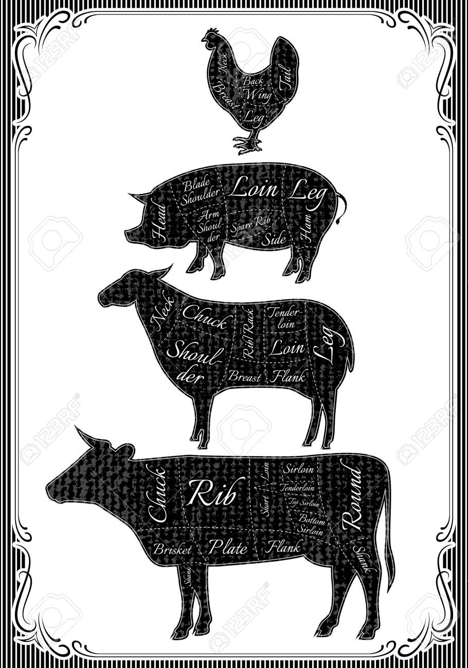 Diagram Cut Carcasses Of Chicken, Pig, Cow, Lamb Royalty Free ...