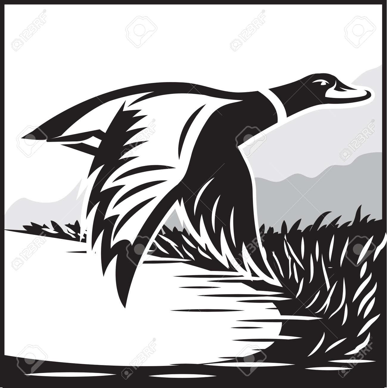 Ilustración De Vector Monocromo Con Vuelo Pato Salvaje Sobre El Agua ...