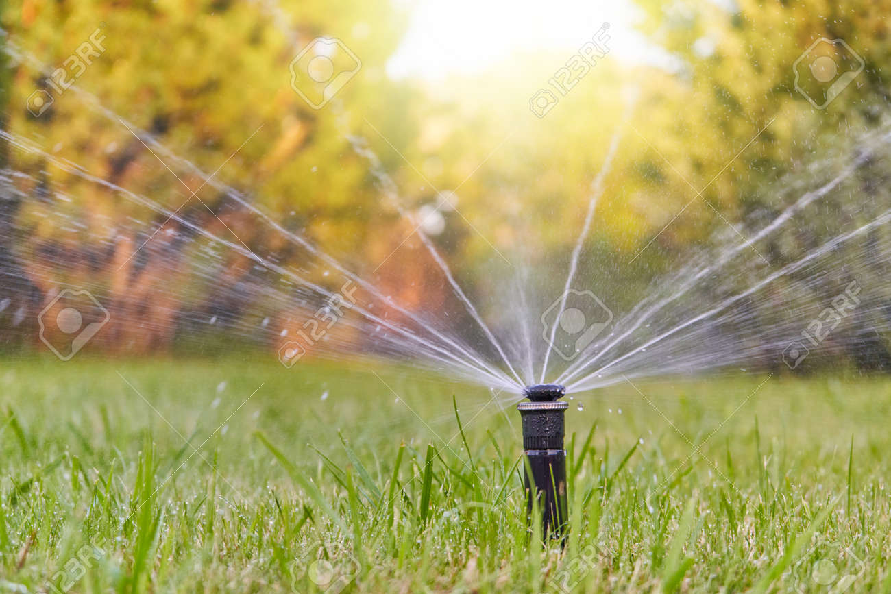 The lawn is watered by an automatic watering system in the garden - 155831710