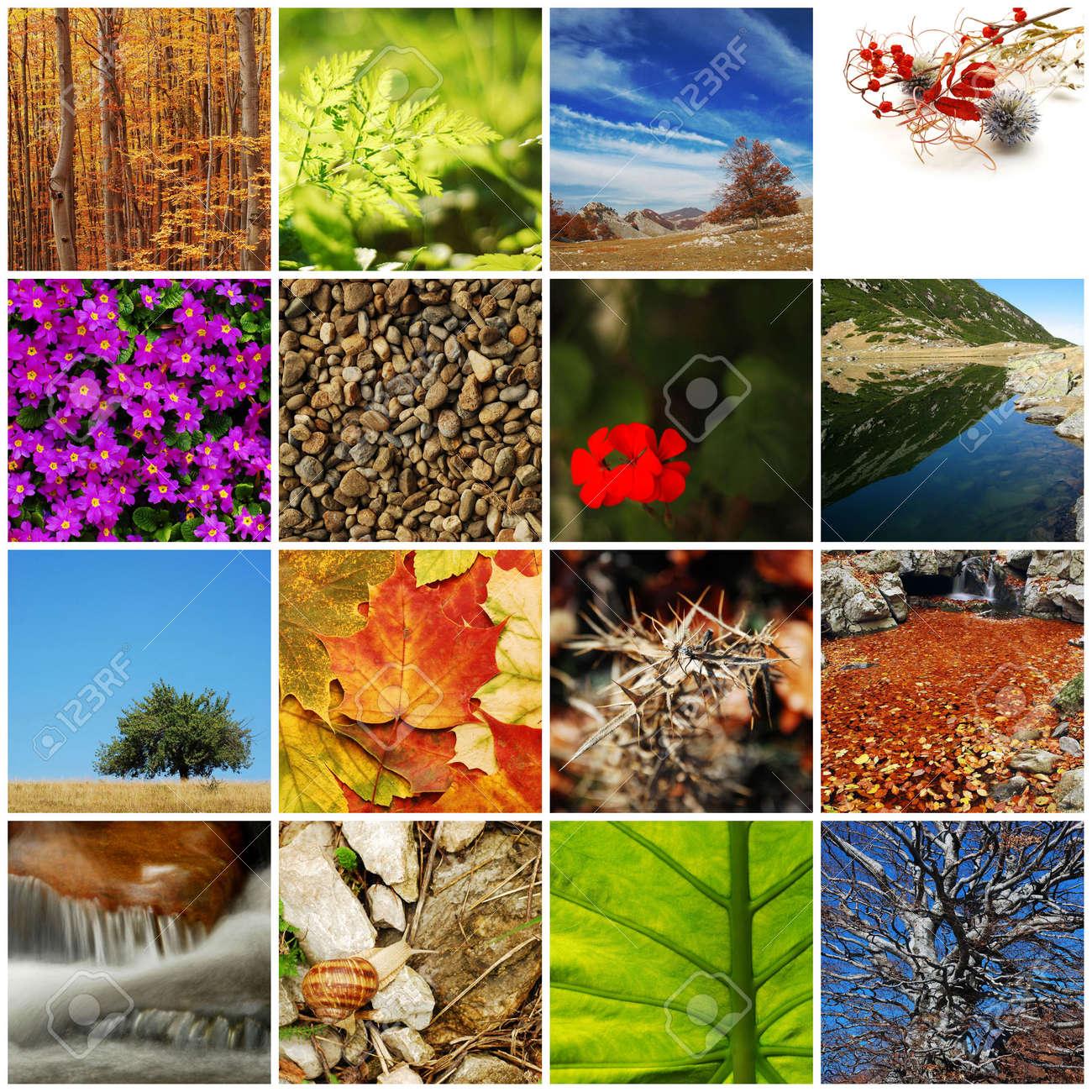nature / autumn collage Stock Photo - 7527091
