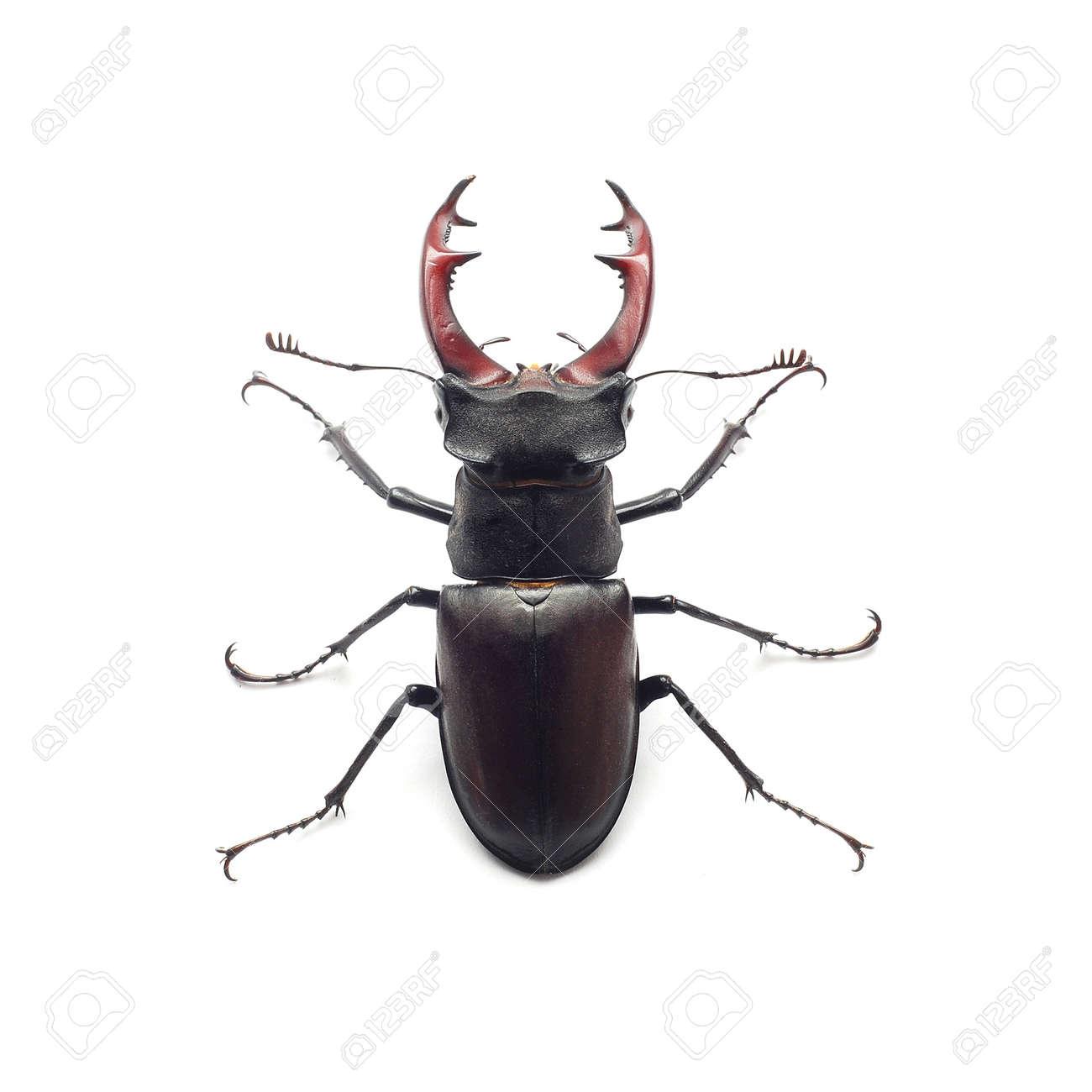 stag beetle - 9938562