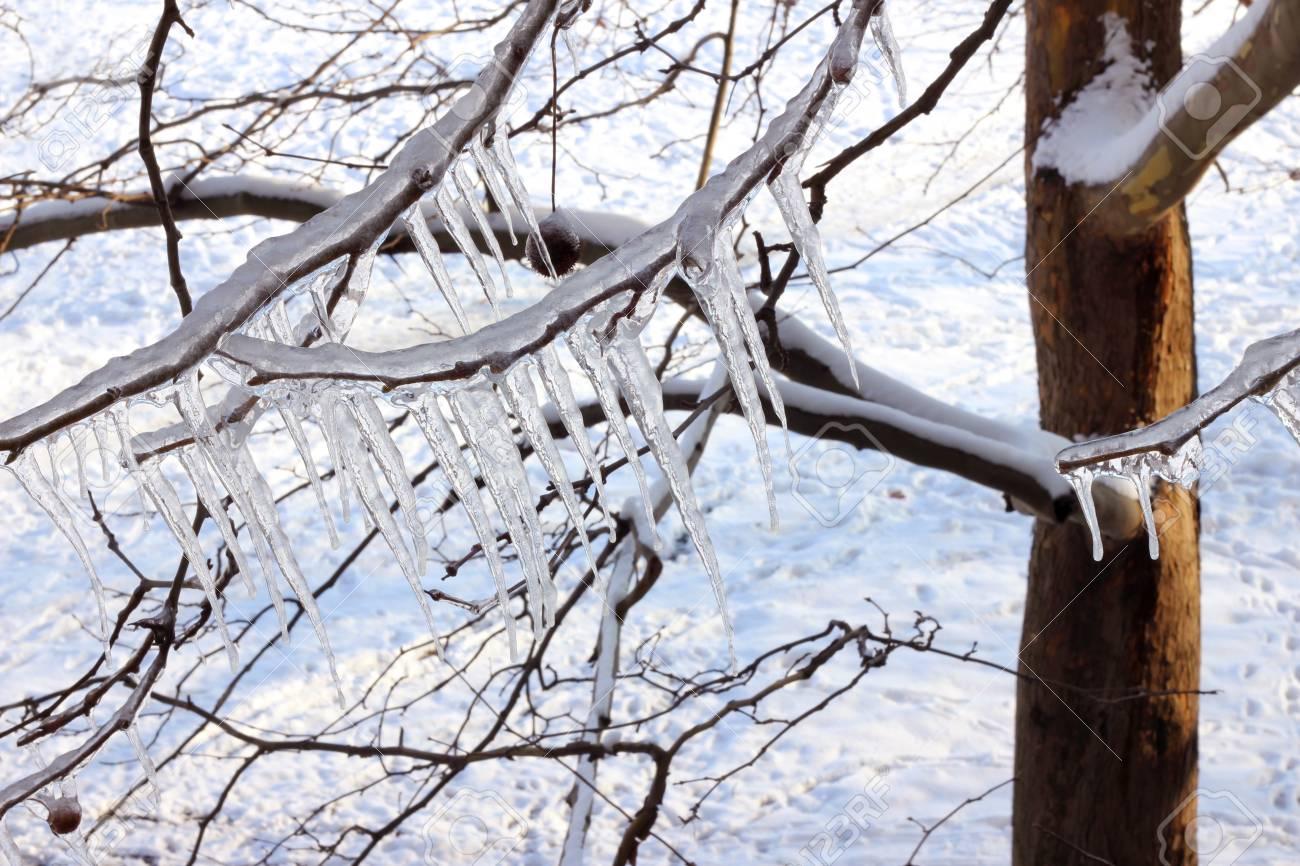 Ice on a frozen tree Stock Photo - 15708361