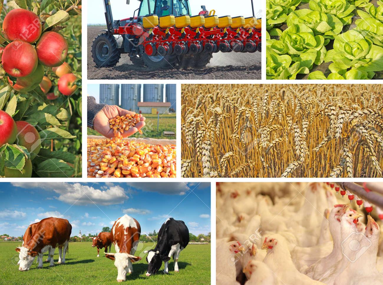 Сельское хозяйство Украины уничтожено?