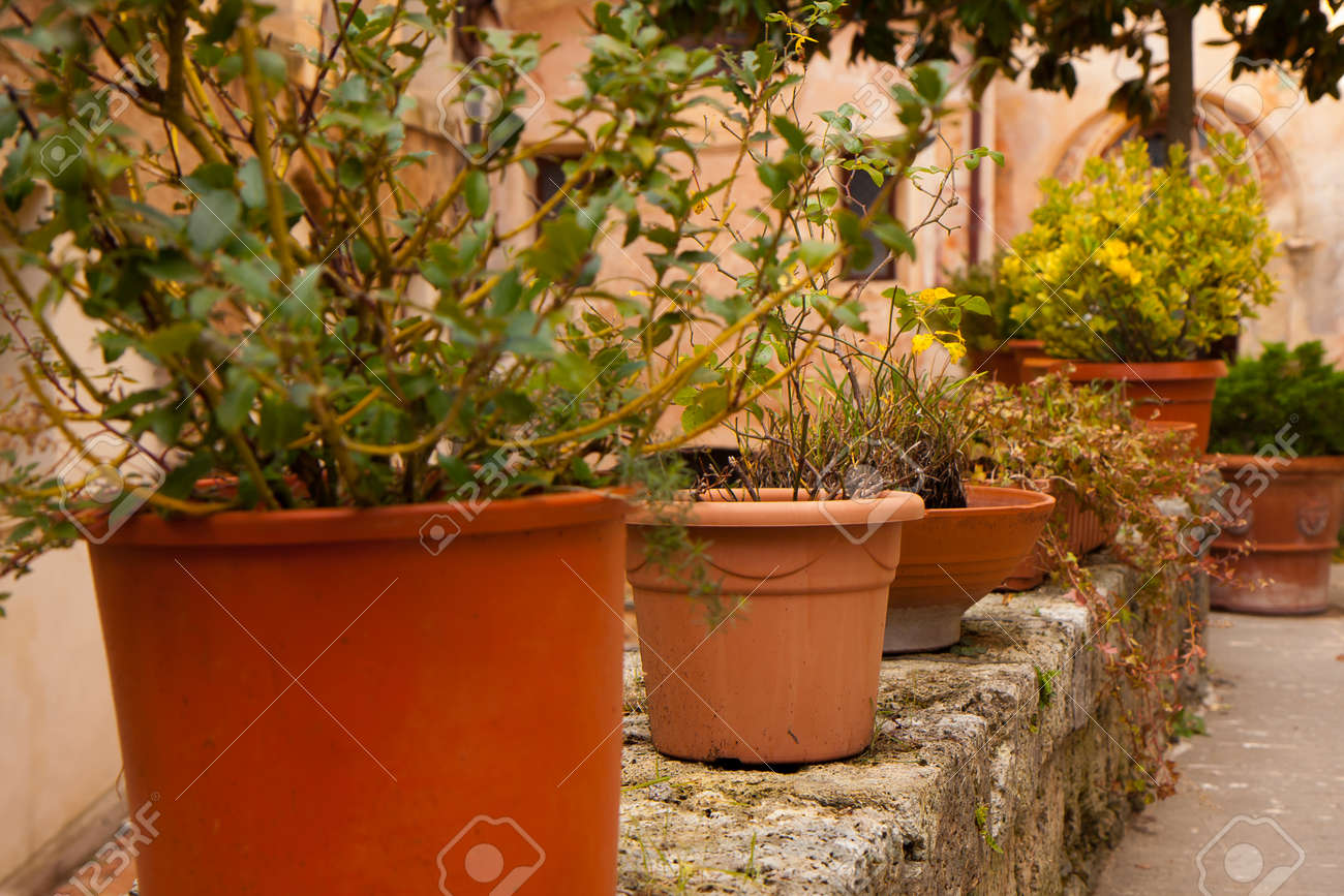 big flower pots standing on a monastery wall. italy stock photo