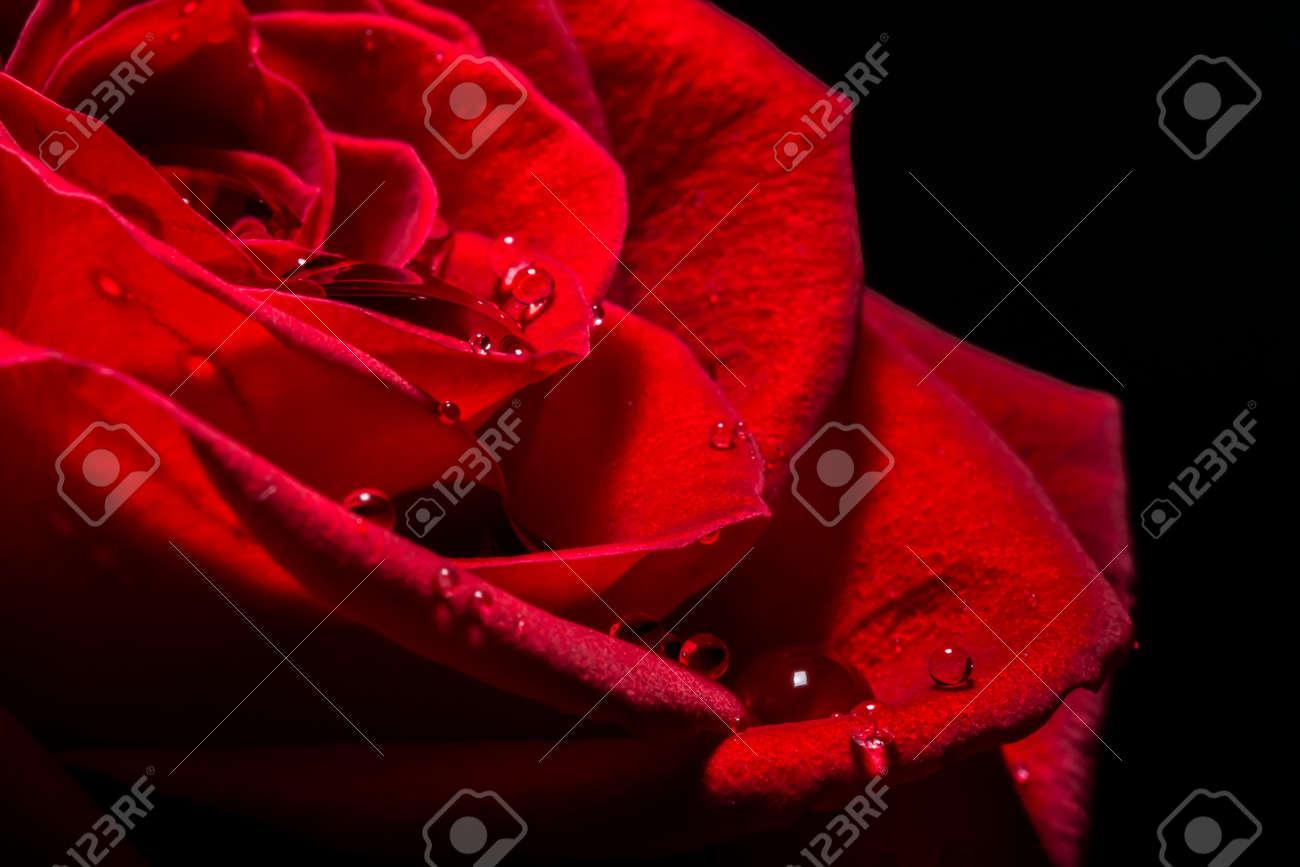 Scarlet Rose Nude Photos 73