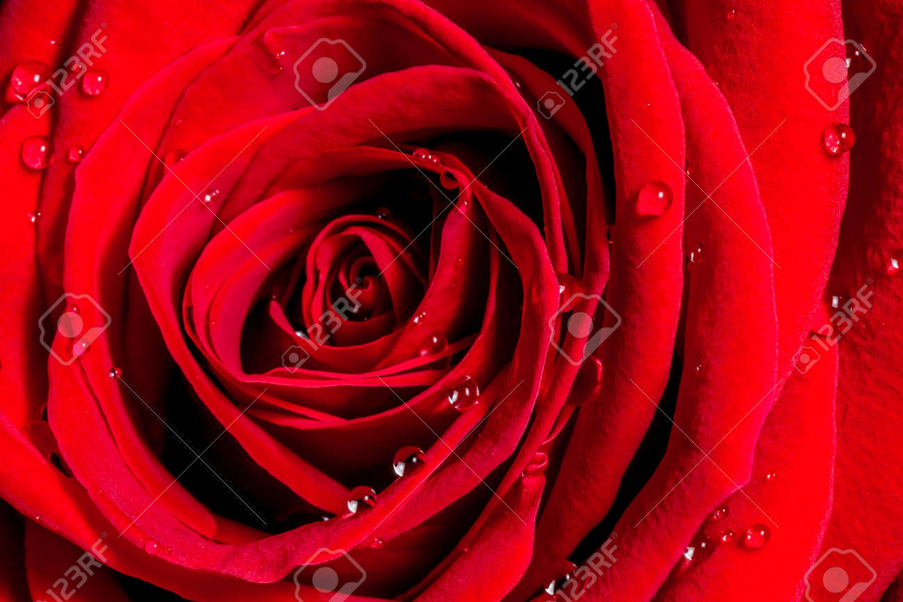 Scarlet Rose Nude Photos 58