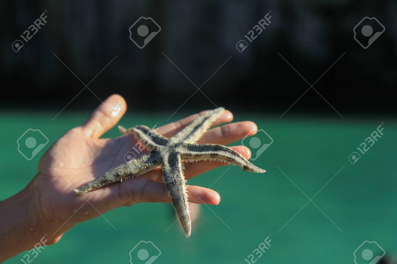 starfish,  south of thailand Stock Photo - 16193580