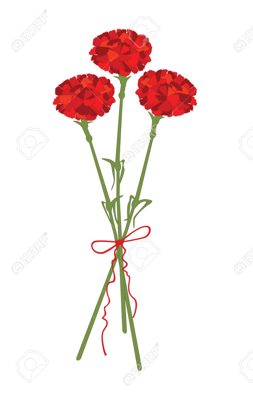 Carnation flowers Stock Vector - 18297303