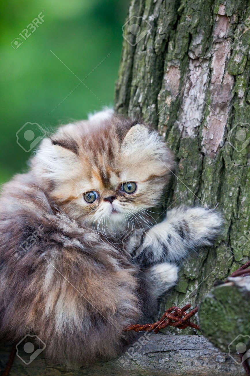 the kitten play at the outdoor. Stock Photo - 5237193