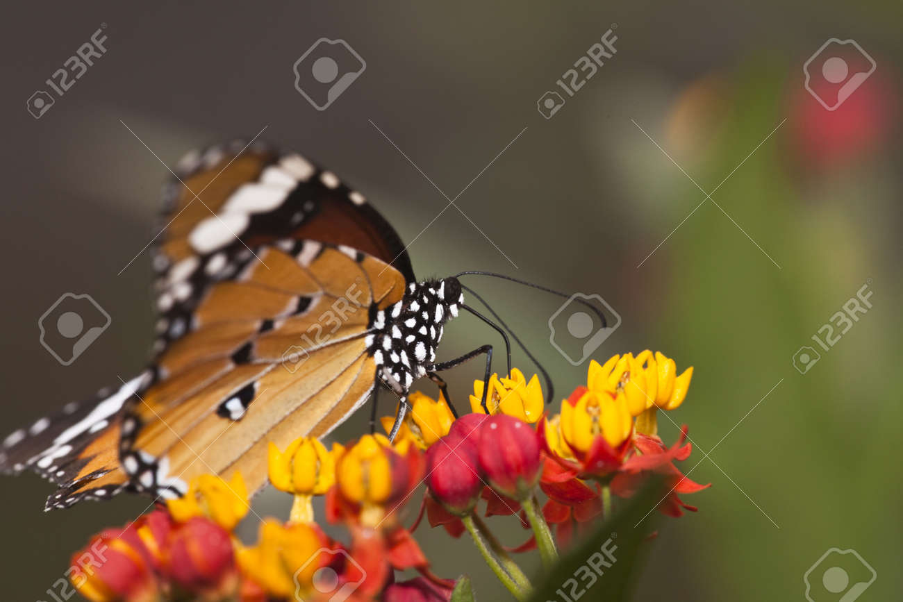 the butterfly fall on the flower in a garden outdoor. Stock Photo - 5707058