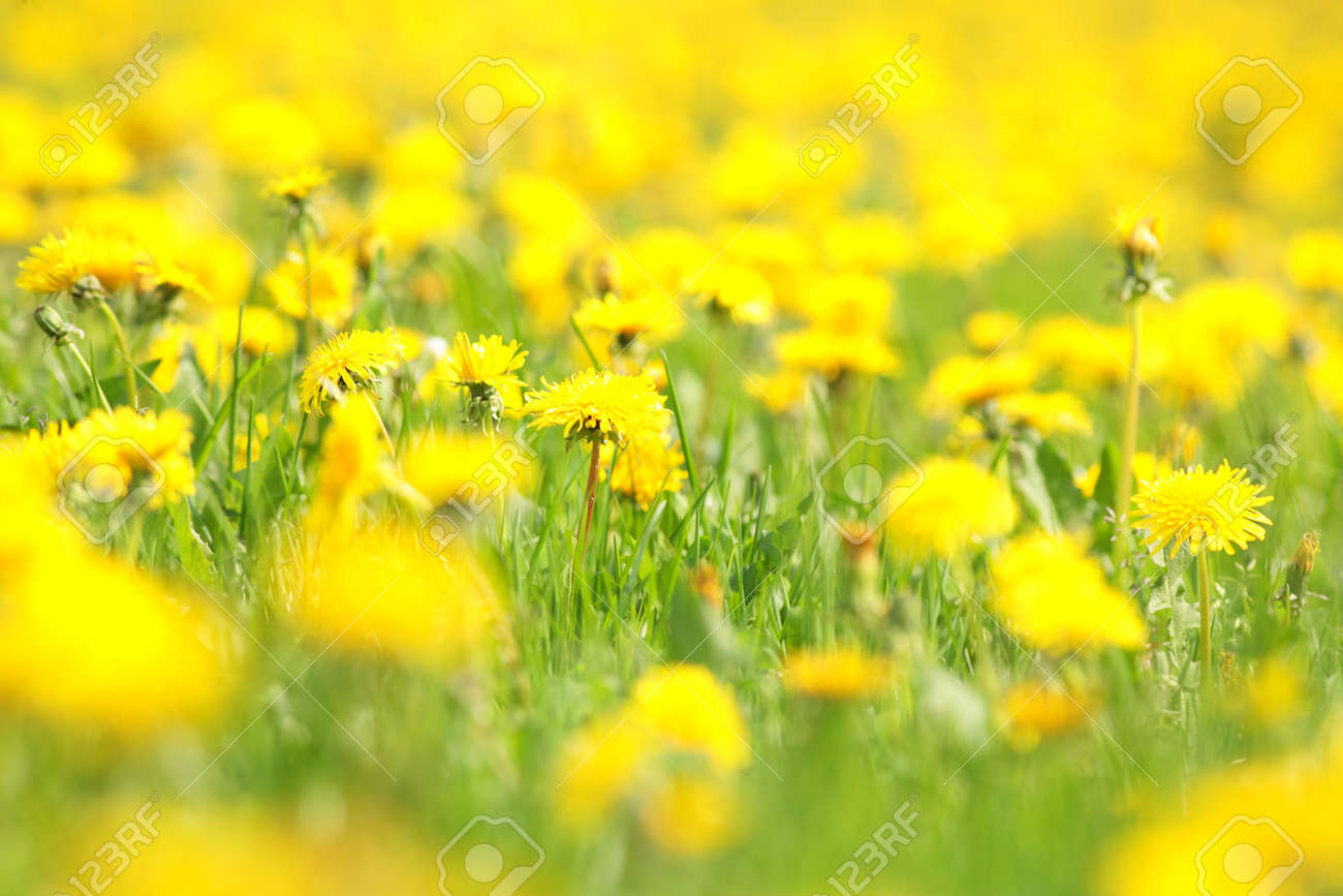 spring flowers in a field VERY SHALLOW DOF!........... Stock Photo - 8809856