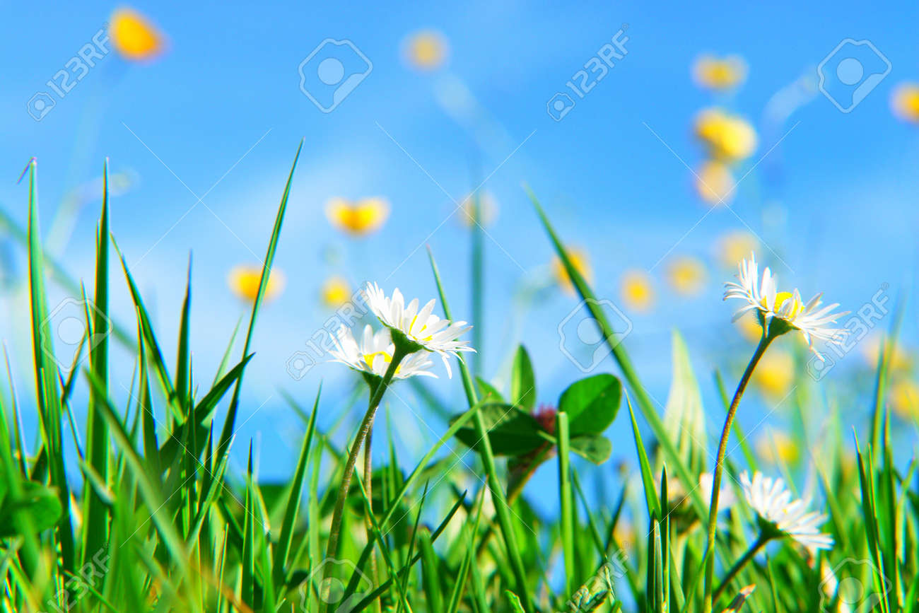 Beautiful spring flowers against a blue sky stock photo picture beautiful spring flowers against a blue sky stock photo 8952597 dhlflorist Choice Image