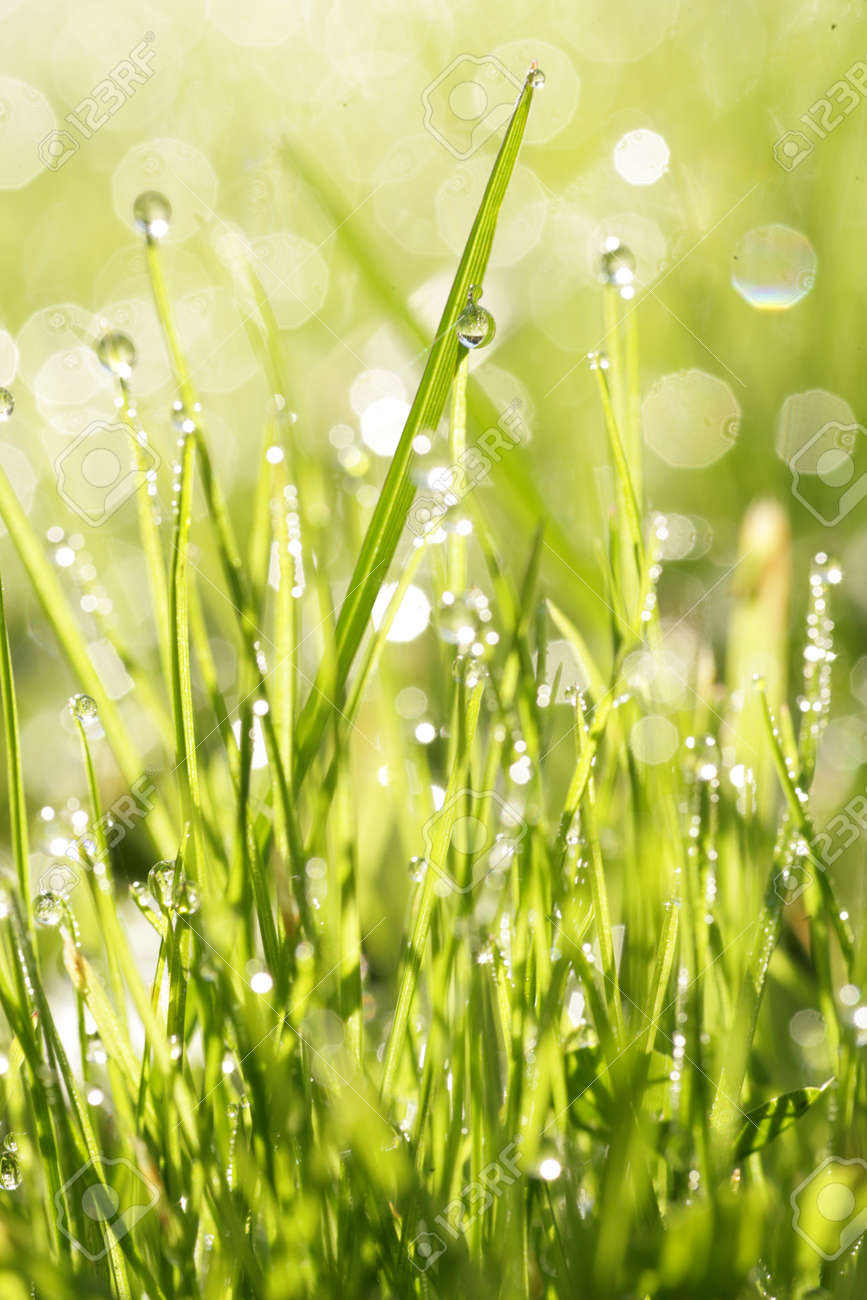 close-up of grass with dewdros, very shallow focus............ Stock Photo - 9076781