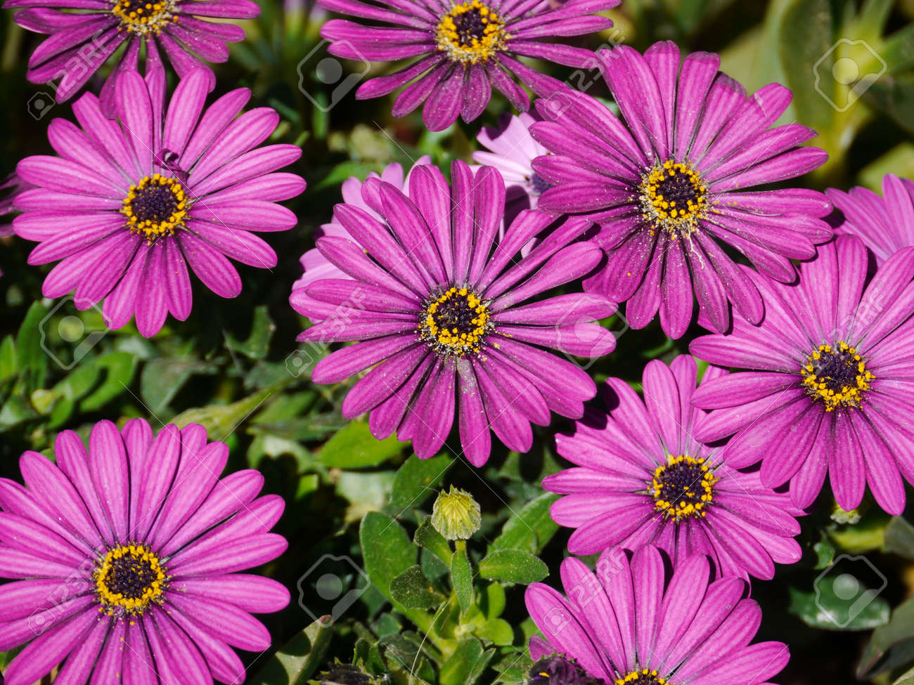 A Lot Of Pretty Purple Flowers Stock Photo Picture And Royalty Free