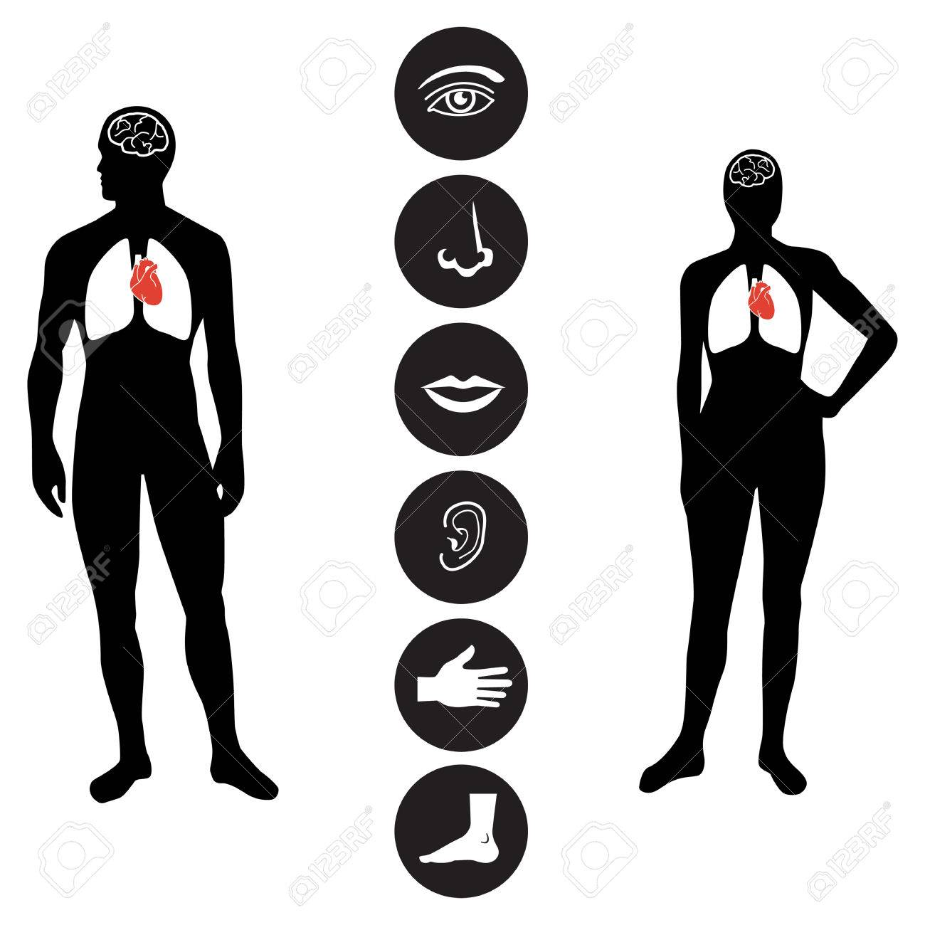 Human Male And Female Body Outline With Icons Of Various Human