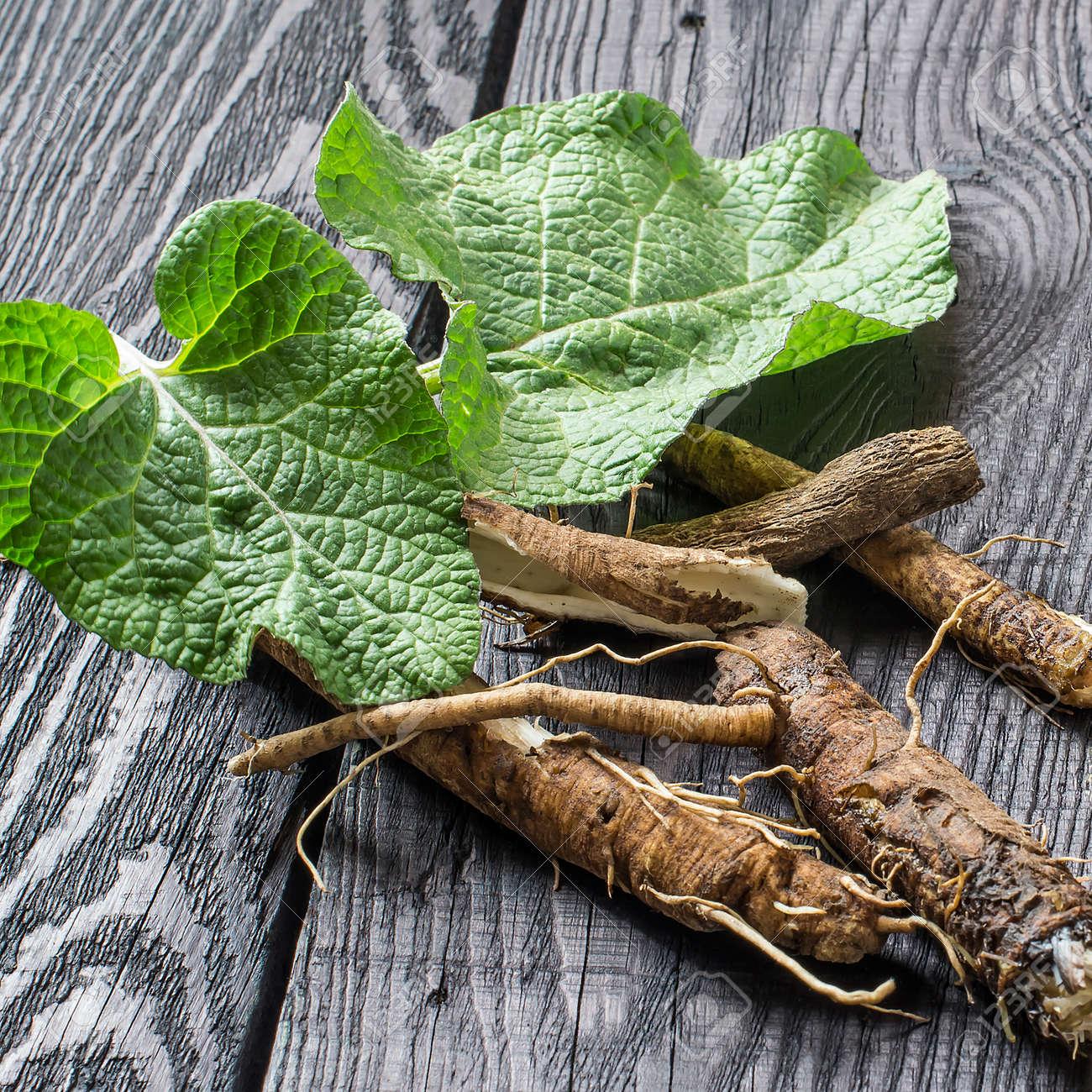 Planta Medicinal De Bardana (Arctium Lappa). Hojas Y Raíz En Un ...