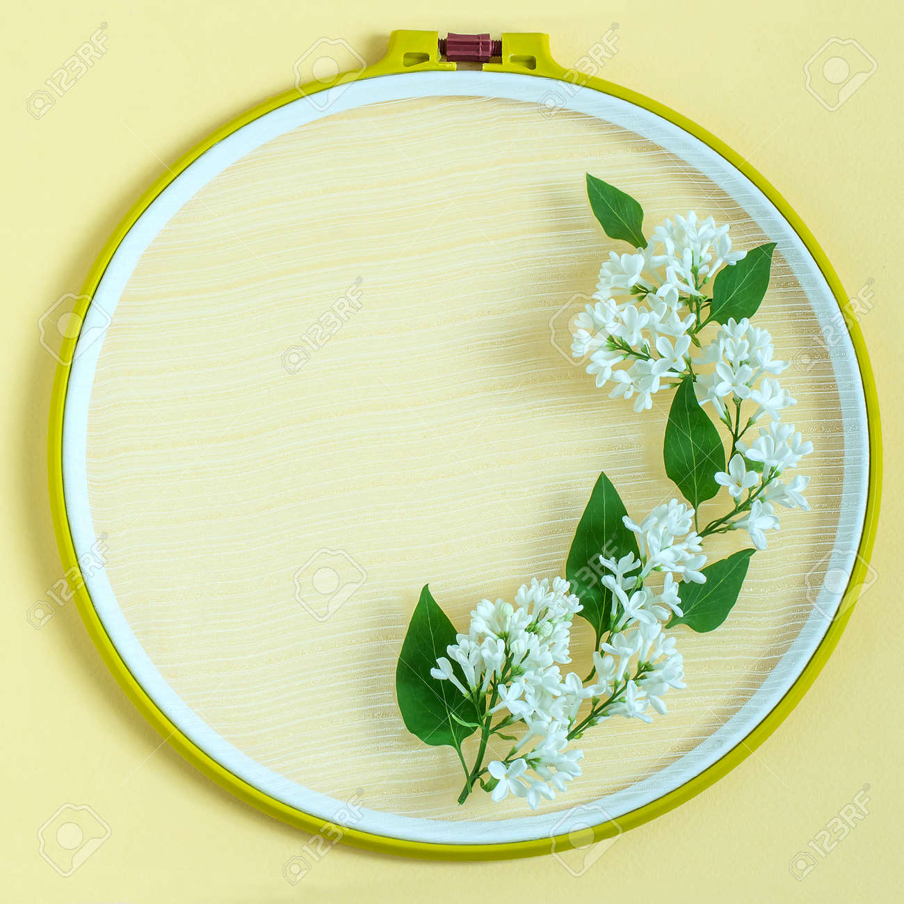 Embroidery frame and flowers of white lilac on pastel yellow stock embroidery frame and flowers of white lilac on pastel yellow background creative festive frame with mightylinksfo
