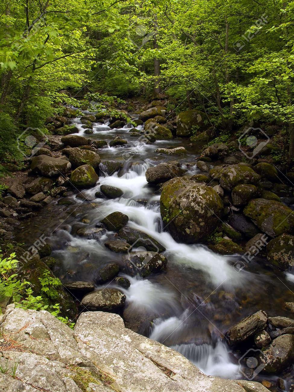summer forest mountain stream Stock Photo - 721293