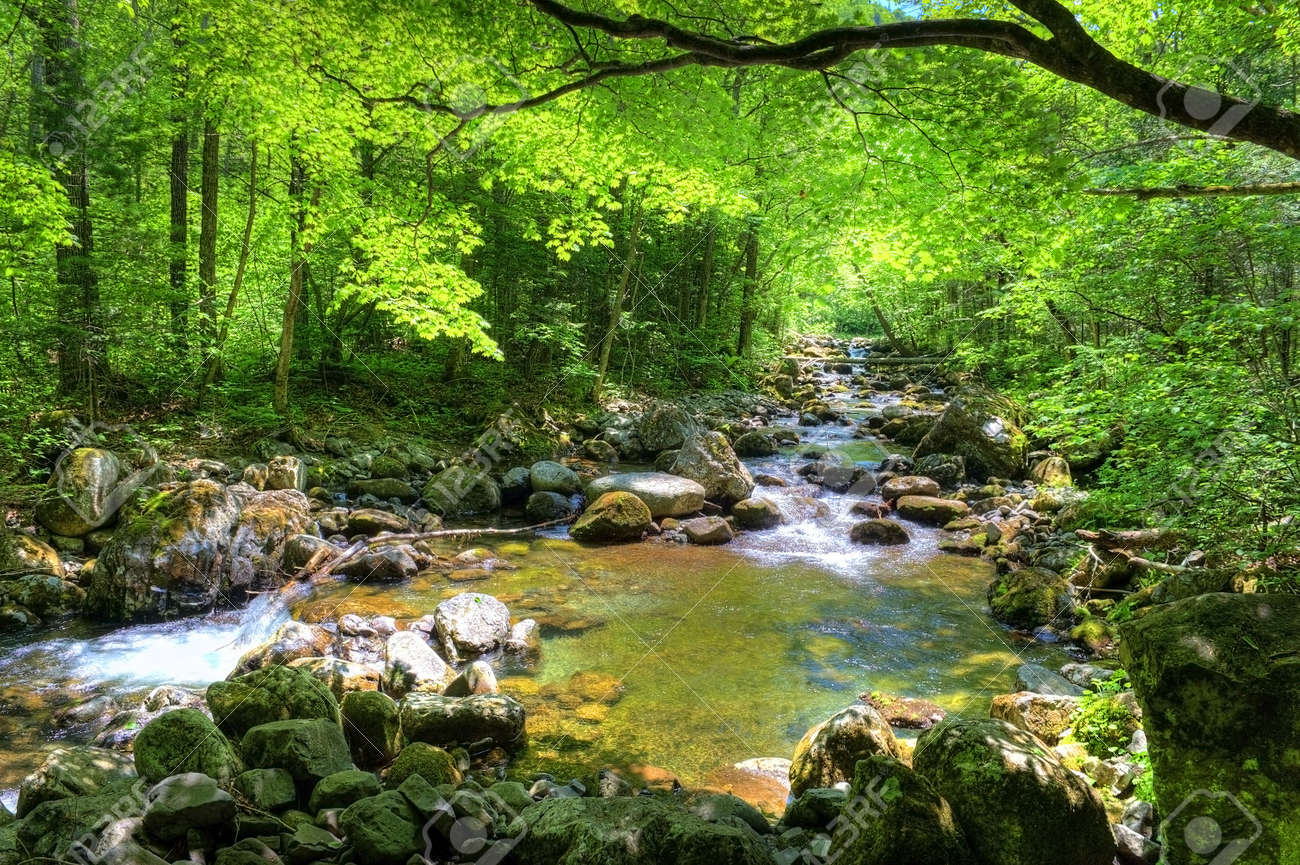 fall forest stream Smolny in russian primorye reserve Stock Photo - 9675236