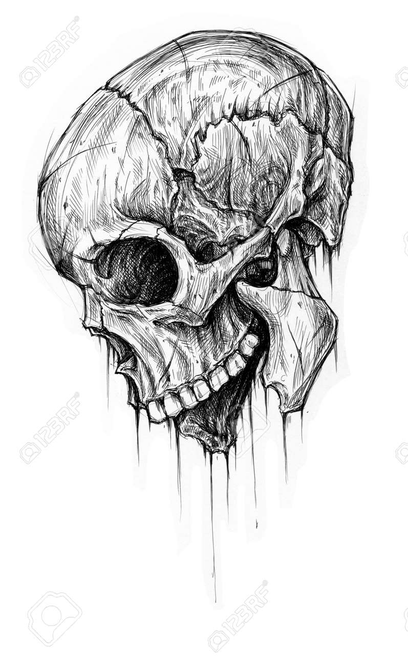 skull traditional ballpoint pen drawing stock photo picture and