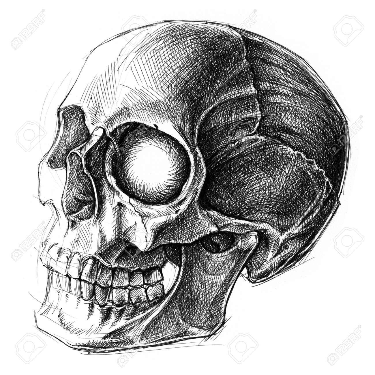 Ballpoint Pen Skull Drawing Ballpoint Pen Drawing