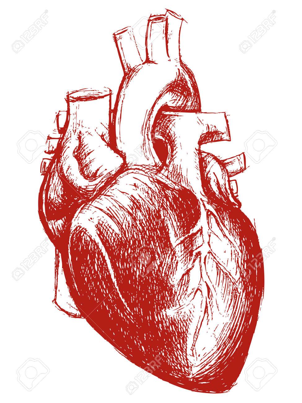 Trabalho De Linha De Desenho Do Coração Humano Ilustraciones