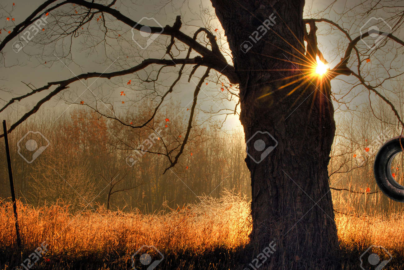 old tire swing haning from an oak tree. Stock Photo - 3256105