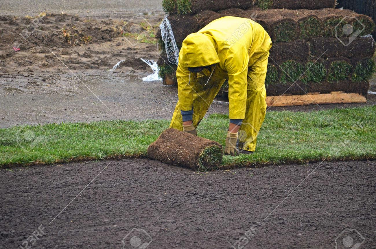man laying sod in the rain Stock Photo - 15671901