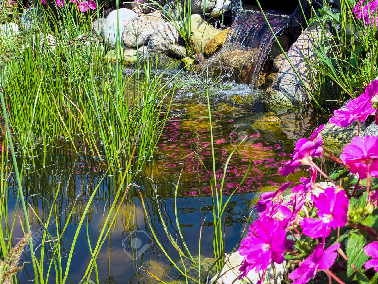 Ornamental Grass And Pink Impatiens Flowers In Rock Garden With