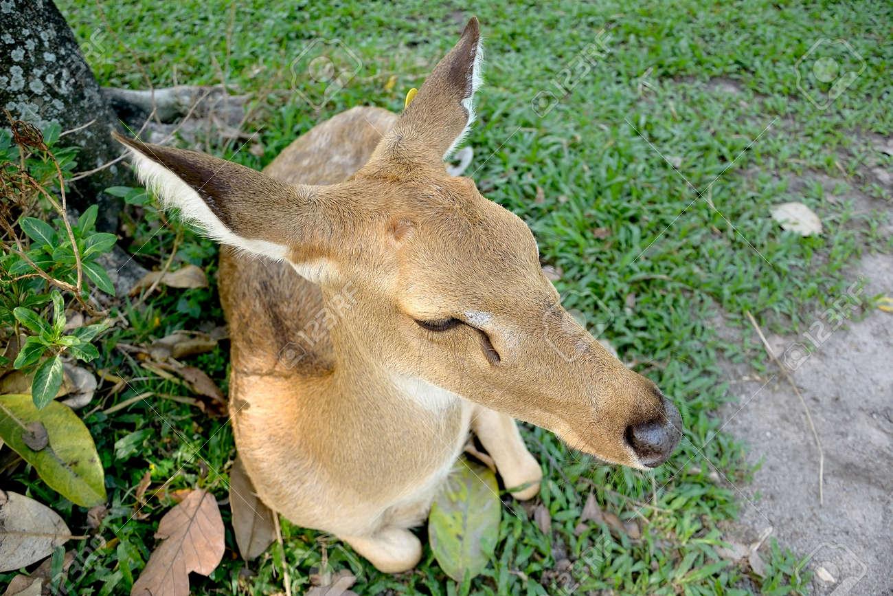 Brow-antlered deer Stock Photo - 19453858