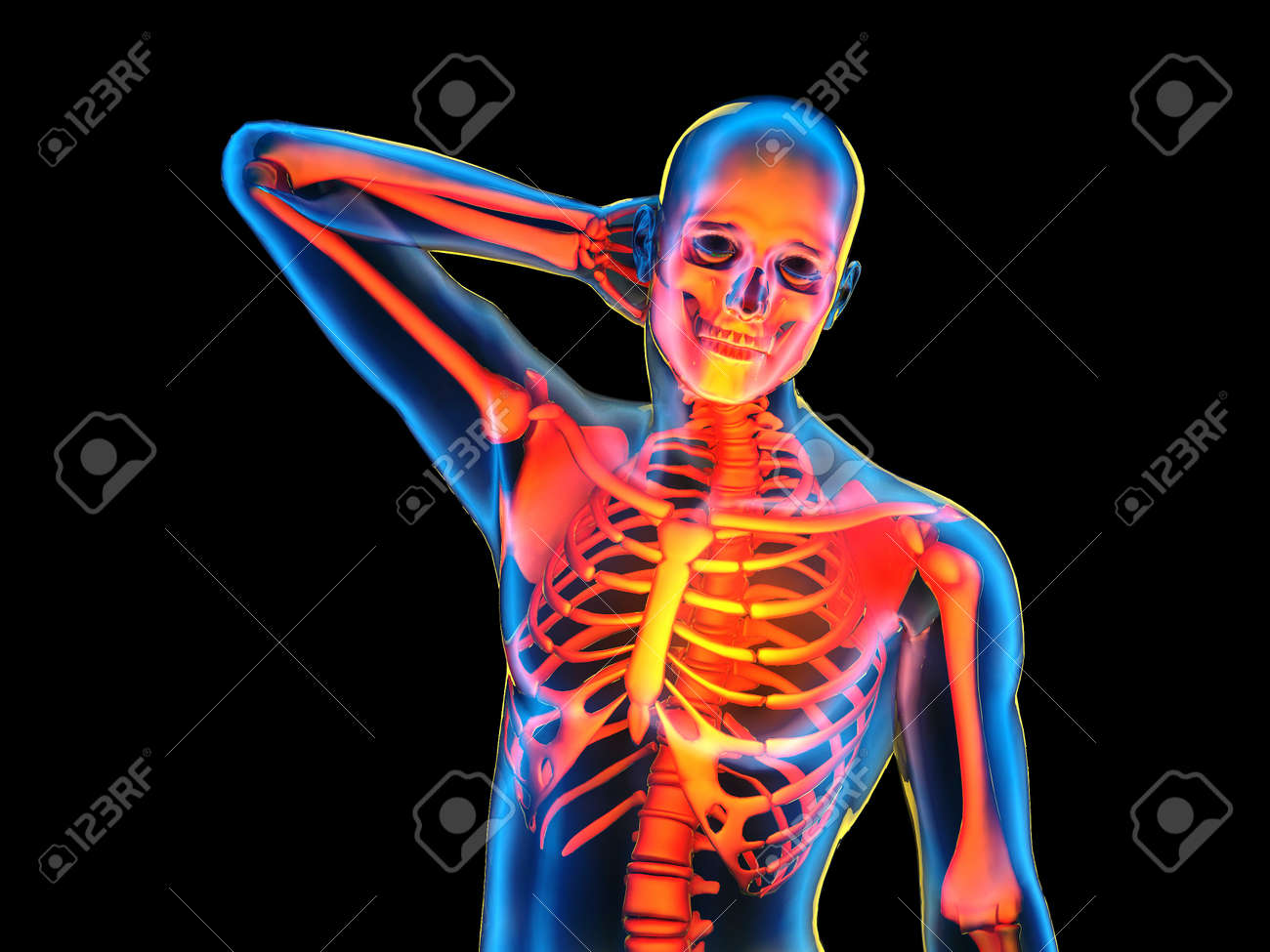 Graphical Representation Of The Human Skeleton3d Render Stock