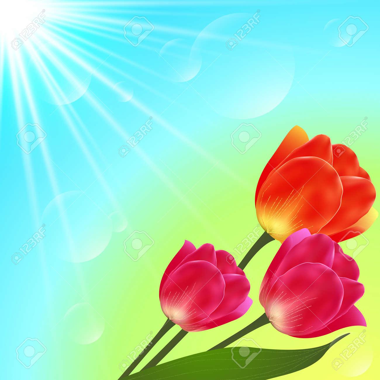 Vector sunny tulip flowers bouquet card template Stock Vector - 19355901