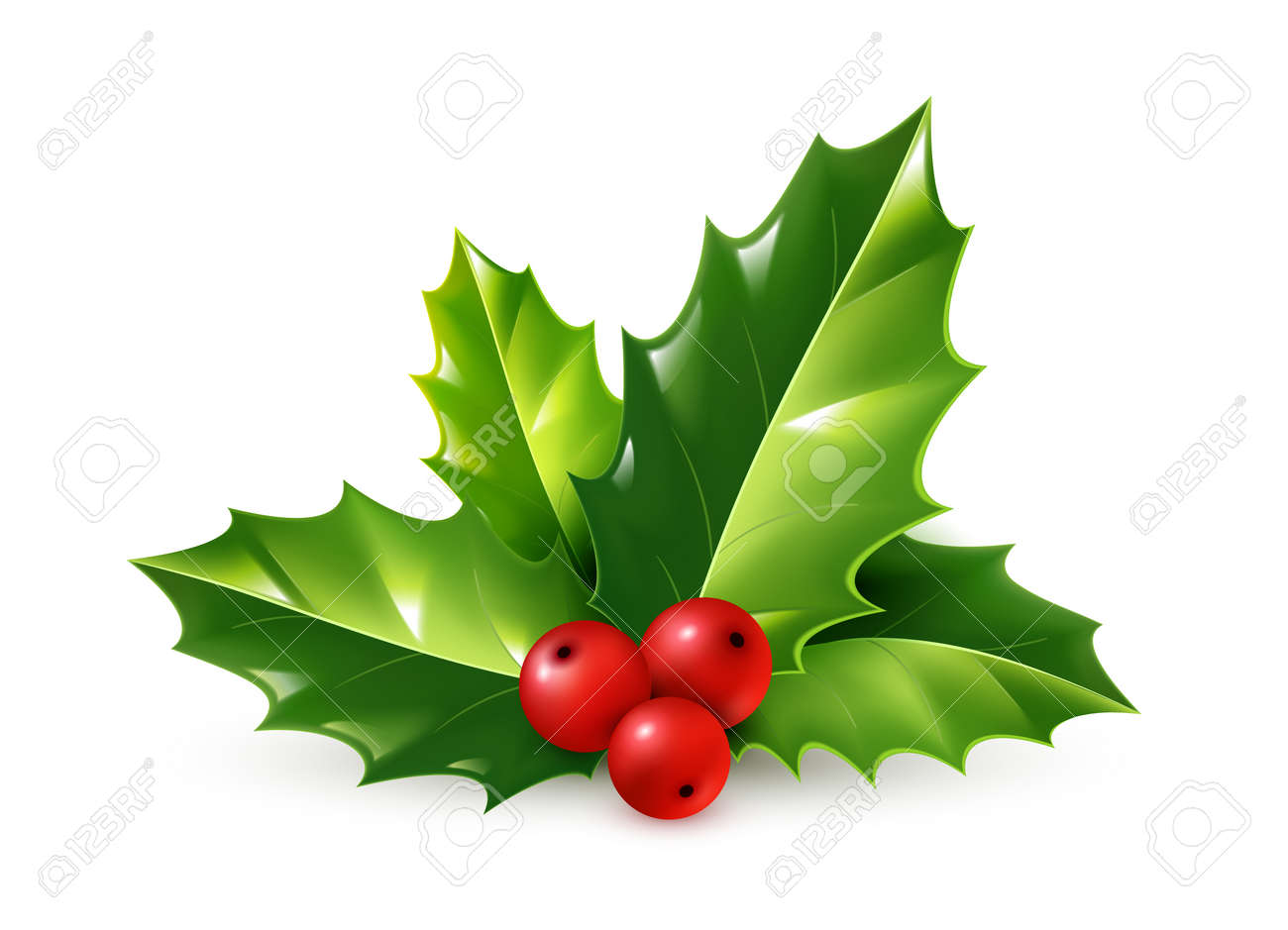 Christmas Leaves.Realistic Holly Christmas Ornament Holly Green Leaves And Red