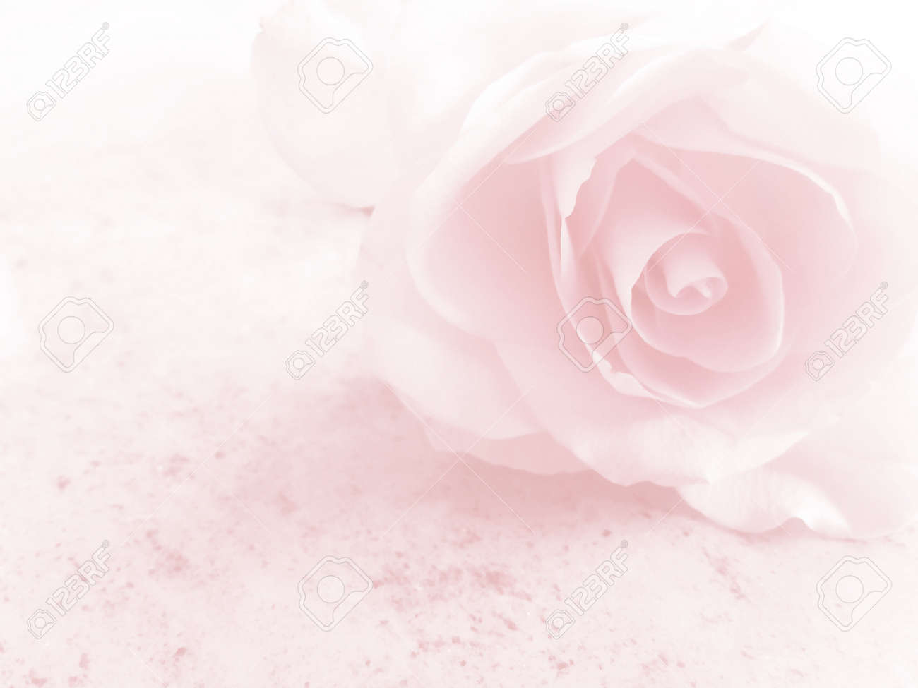 Romantic Soft Pink Flower Background Stock Photo Picture And