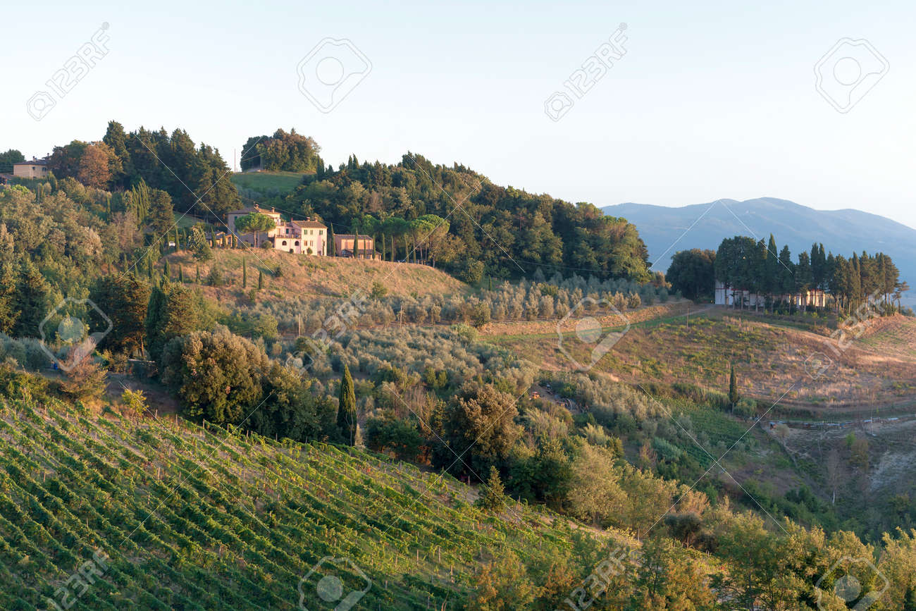Landscape with vineyard, trees and house in Tuscany Italy at sunset Stock Photo - 26261530