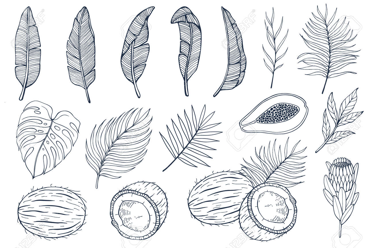 Set with palm leaves and exotic fruits papayas, coconuts and exotic flovers, banana leaves. Hand drawn vector illustration - 119675851