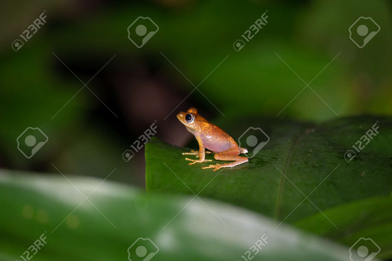 The small orange frog is sitting on a leaf - 144873652