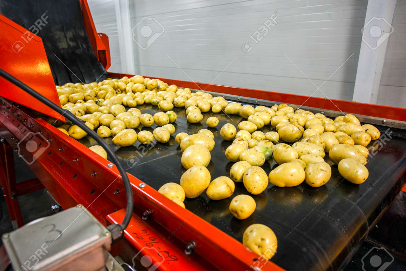 Potato sorting, processing and packing factory vegetable with big machine - 52838106