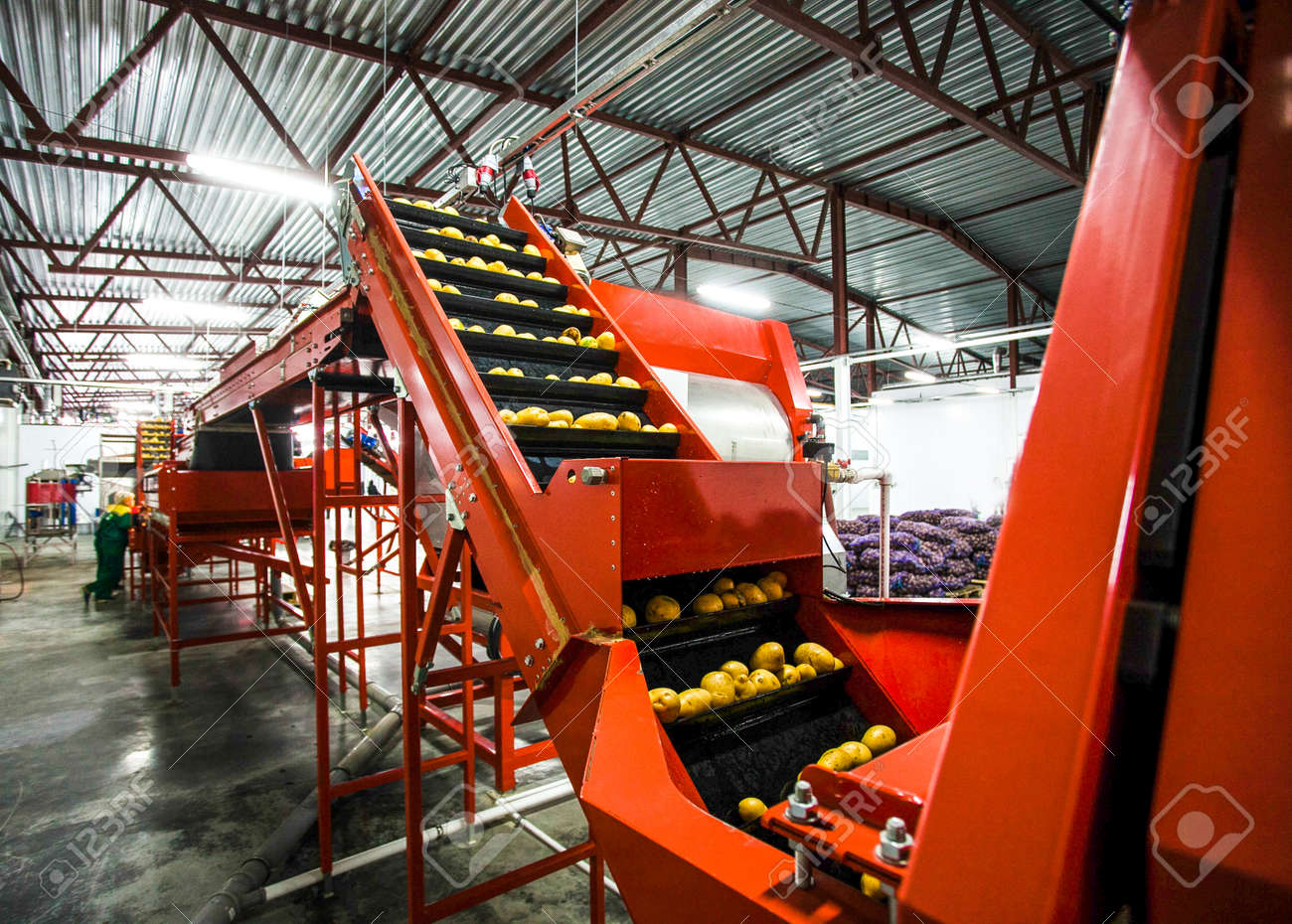 Potato sorting, processing and packing factory vegetable with big machine - 53401012
