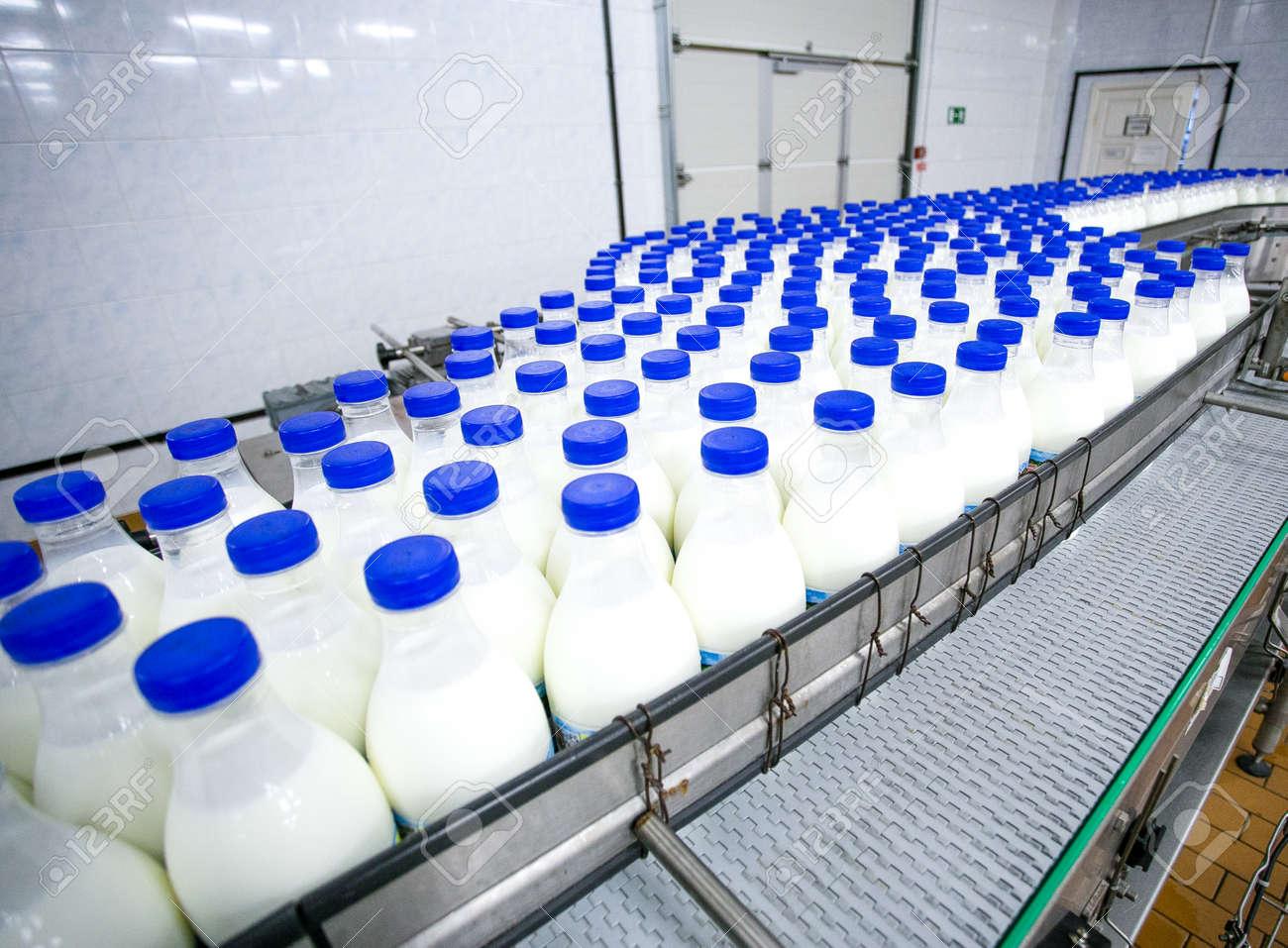 Dairy plant, conveyor with milk bottles in food factory - 53401438