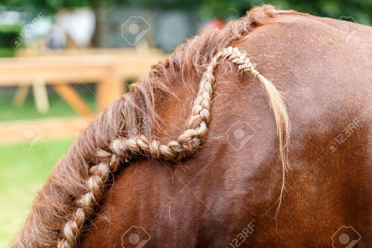 Red horse mane hair - closeup soft light - 59865645