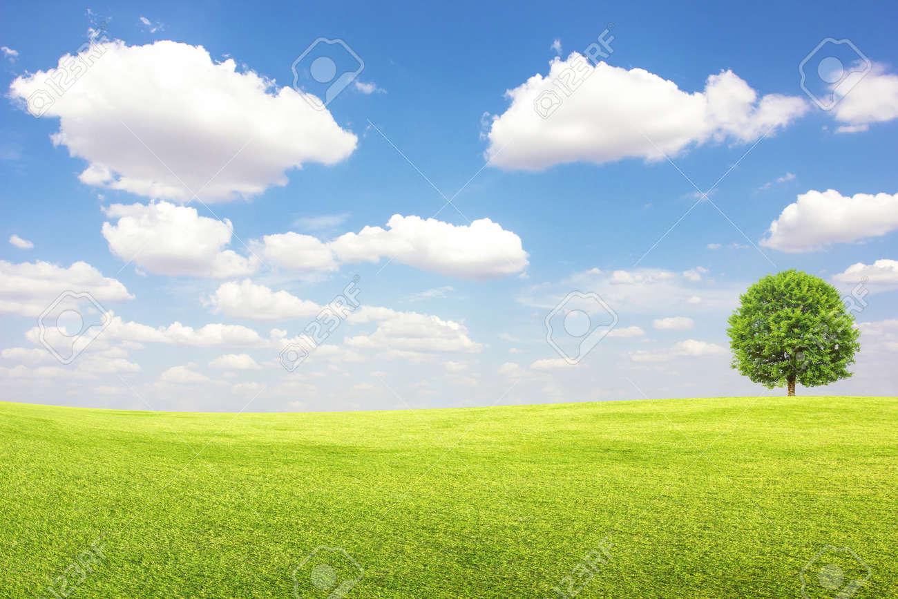 banque dimages champ vert et larbre avec le ciel bleu nuages - Arbre Ciel