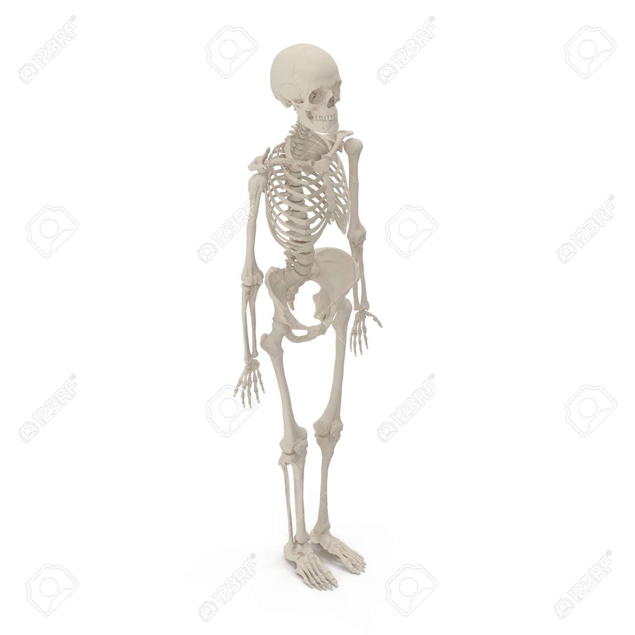 Fantastisch Weibliche Skelett Anatomie Fotos - Anatomie Von ...