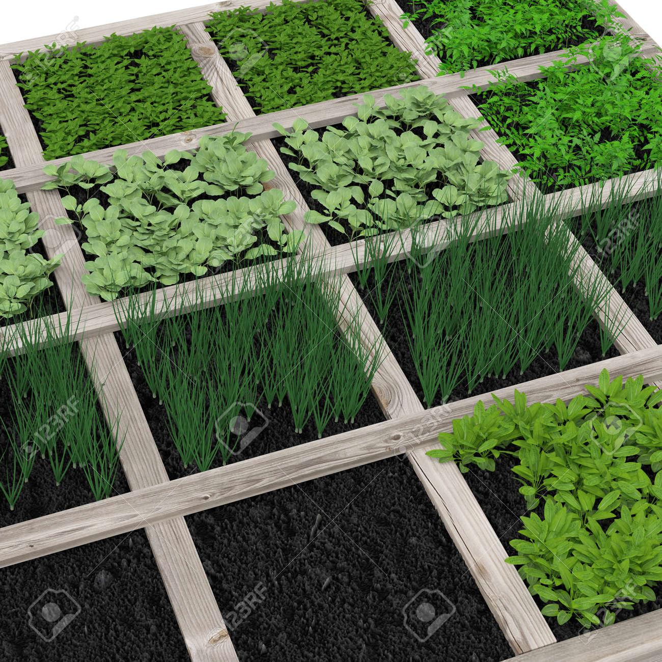 Jardin Potager Avec Assortiment De Legumes Et Recipient Froid Sur